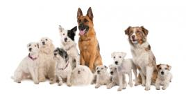 Kategorie psů