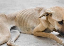 Týrání zvířat je trestný čin