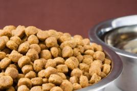 Správné krmivo pro psa